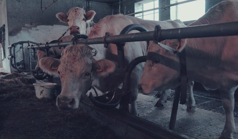 Perspektive Landwirtschaft außerfamiliäre Hofnachfolge Übergabe Kärnten KÄTN PELA