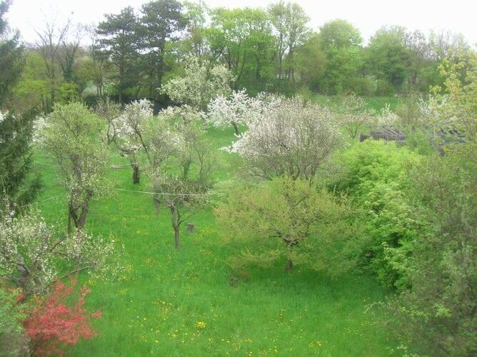 ... mein Hausgarten - eine Streuobstwiese mit bis zu 118 Jahre alten Obstbäumen, ...