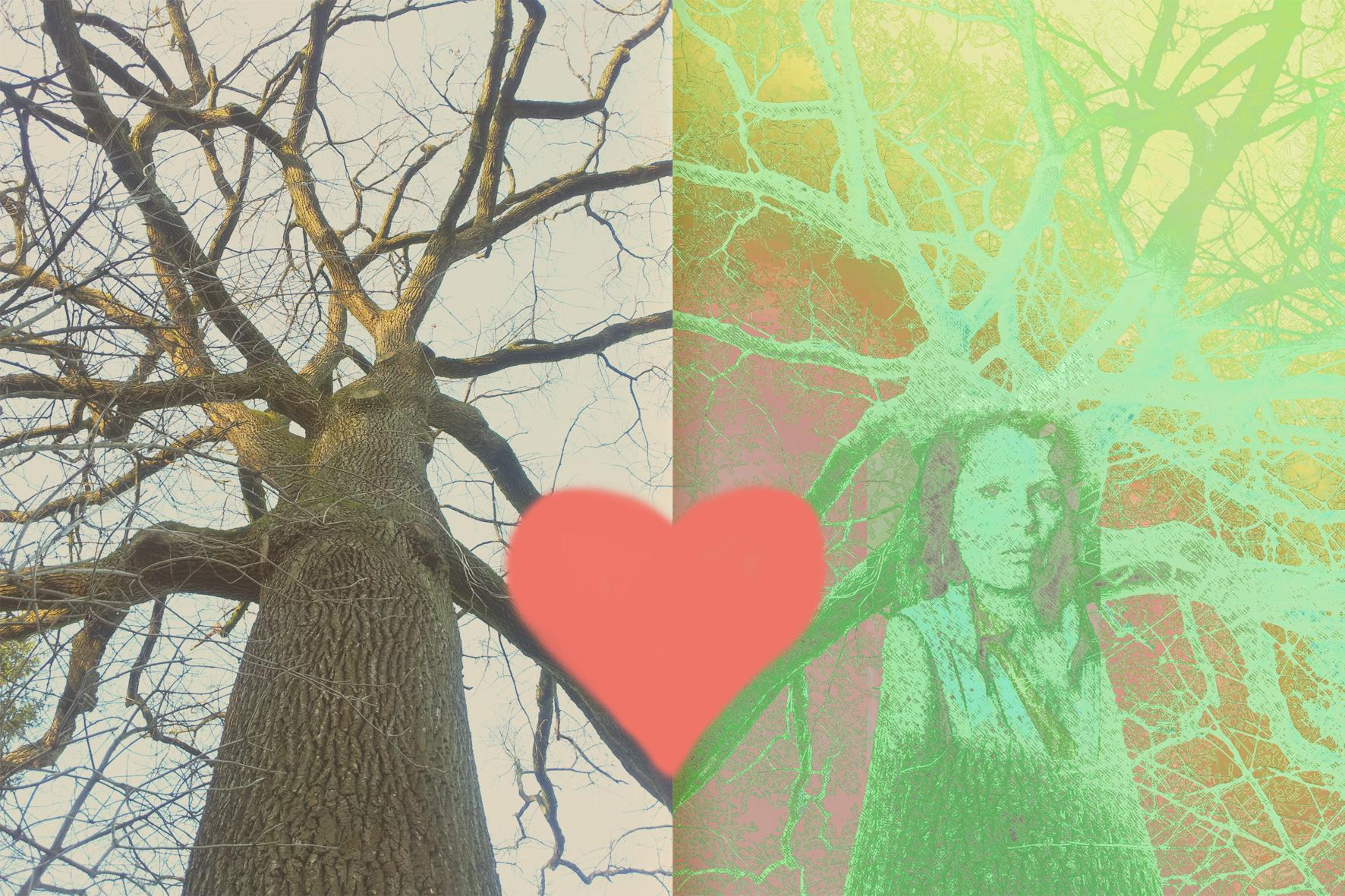 my_oak_and_me